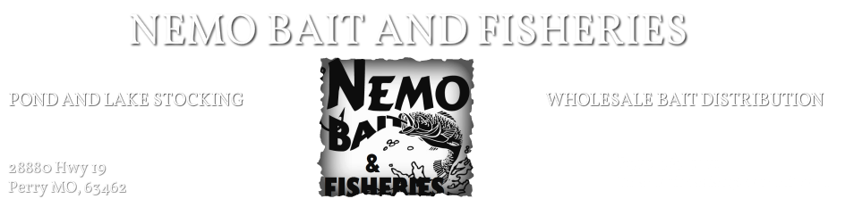 NEMO BAIT & FISHERIES